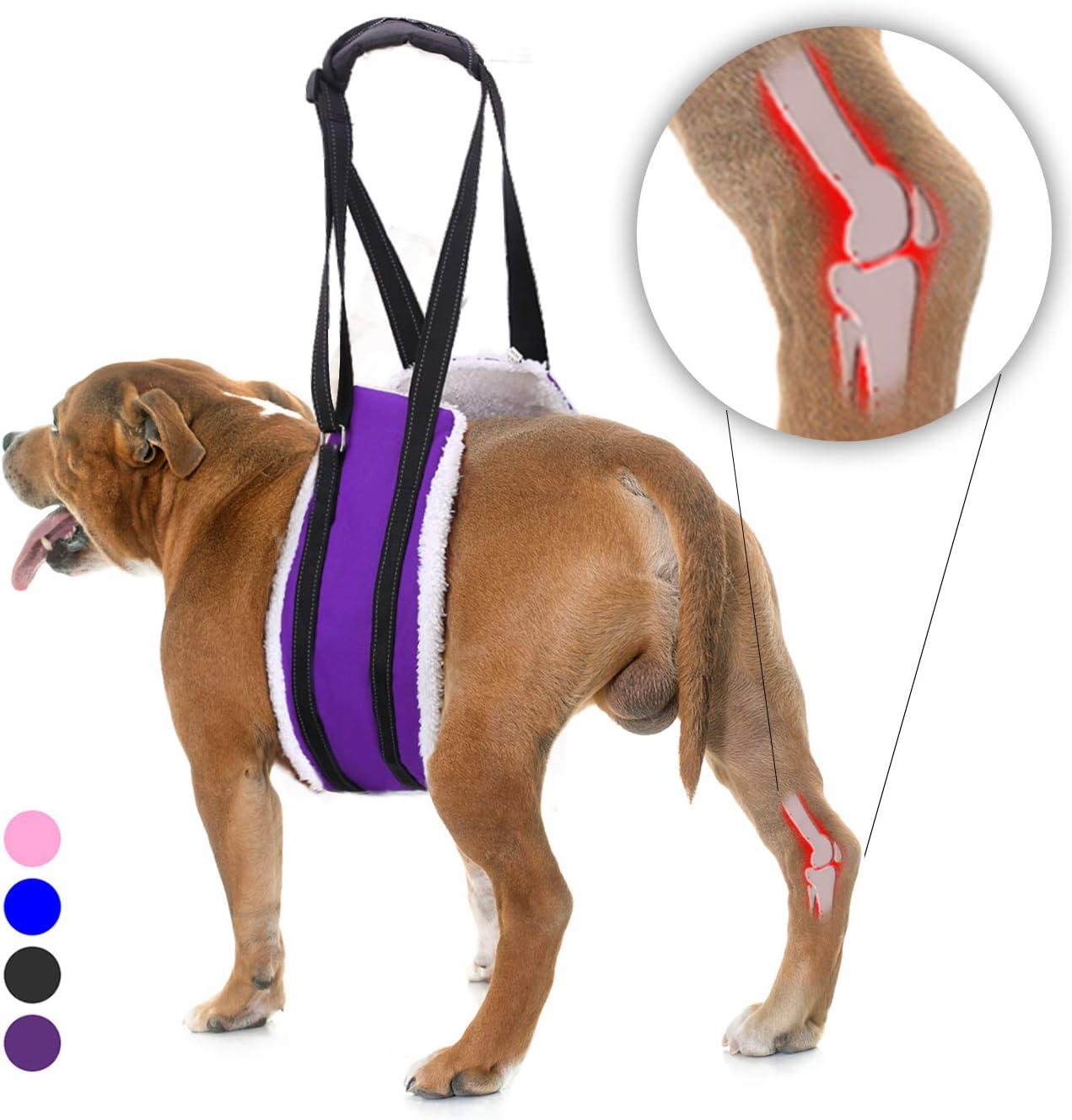 Arnes para perros, talle M, violeta