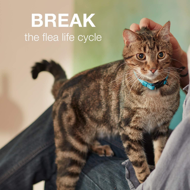 Advantage II Flea Prevention for Small Cats 5-9 lbs