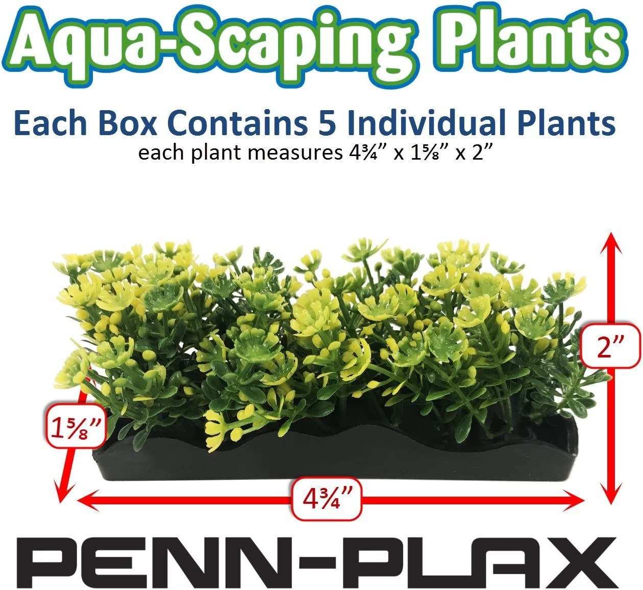 Bunch Plants Foregrounder Aqua-Scaping Create a Lush Aquatic Landscape Instantly with a Box of Five 4 3//4 Long x 1 5//8 Wide Plants
