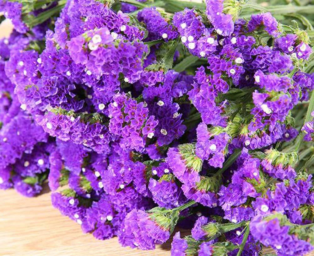 Tienda Amarillo Boda TooGet Flores Secas Naturales No Me Olvides Las Ramo de Flores Siempre vivas para Manualidades Decoracion Fiesta Dried Flowers Forget Me Not Bouquet Bundles
