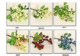 10 Pieces/Pack Artificial Plant Single Stem Fake