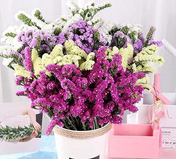 lahomia 30x Vergissmeinnicht Getrocknete Blumen Versch/önerung F/ür DIY