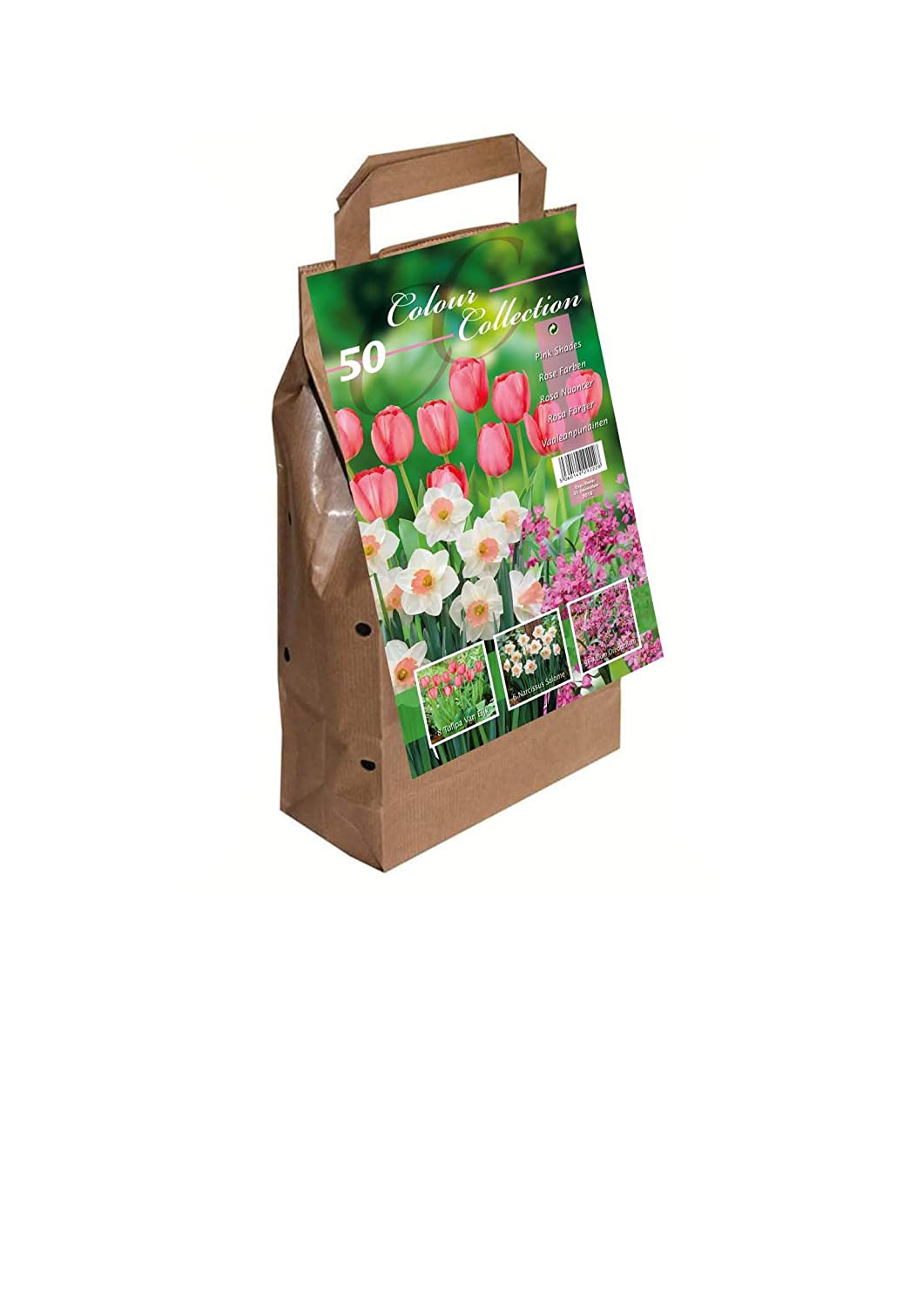 Greenbrokers Colour Harmony Lot de 25 bulbes à fleurs Mélange de fleurs du printemps Rose Greenbrokers Limited FB14