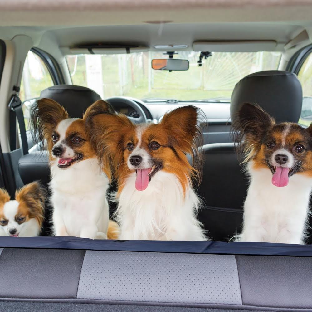 Perro fundas de asiento para coches - Funda de asiento impermeable Hamaca - azul marino de mascota Perro Protector De Asiento De Coche Para Perros Y ...