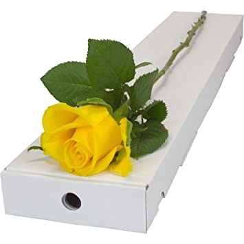 Yellow Rose Fresh Presented In A Letterbox Friendly Long