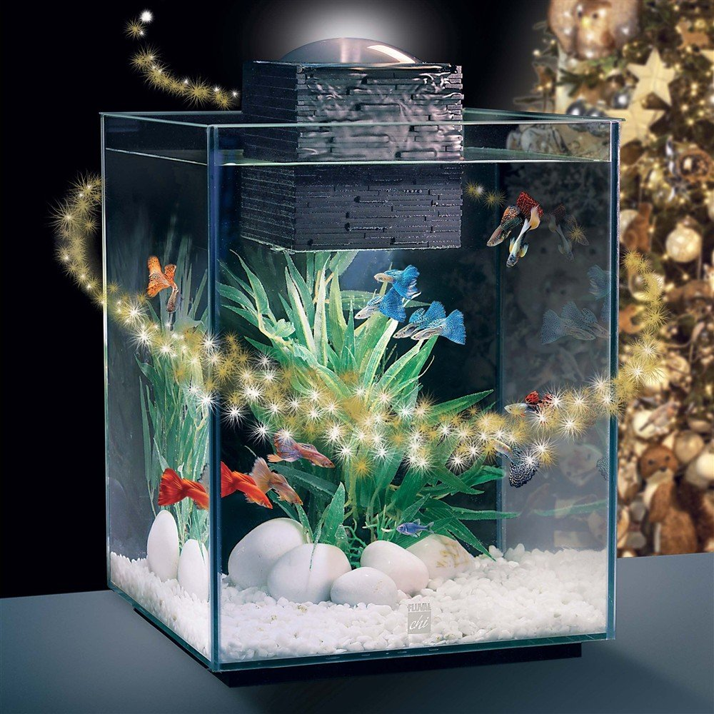 Fish aquarium in janakpuri - Fluval Chi 2 Aquarium 19 Ltr Deluxe Fish Tank Amazon Co Uk Pet Supplies