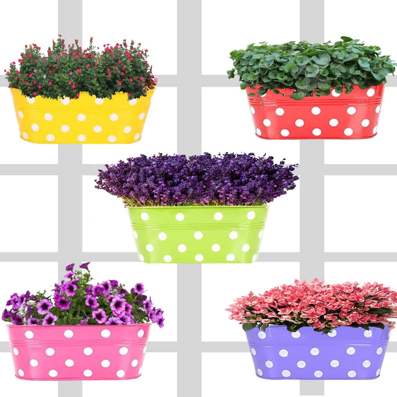 Bison International Polka Dotted Oval Railing Planters Balcony Garden; Multicolour - Pack of 5 product image