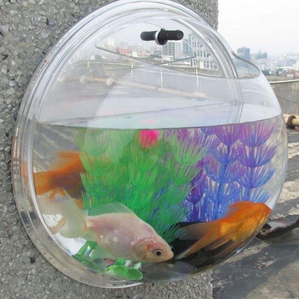 Amazon.com: Wall Mounted Goldfish Tank Bowl Vase, Hanging Walled ...
