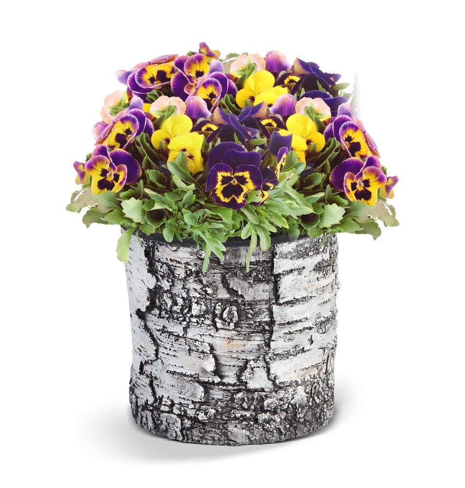 SURREAL Planters VB-8 Vertical Planter, 9-Inch, Birch