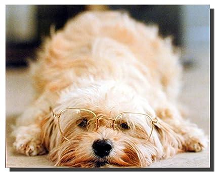 amazon com funny cute dog with glasses pet animal wall decor art