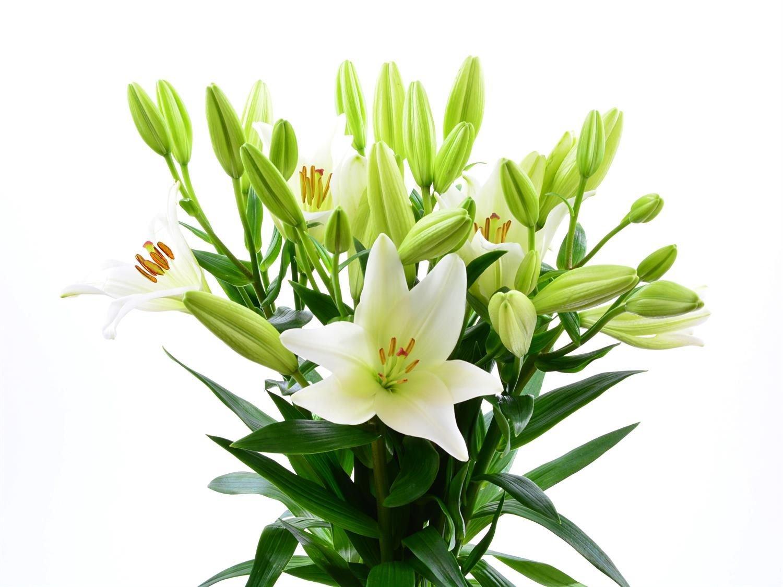 Blumenversand - Blumenstrauß - weiße Lilien Litouwen - 10 Stück im Bund - ein Lilientraum in weiß