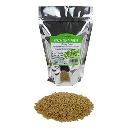 16 Oz. 1 Lbs Ornamental Barley Grass Organic Barley Seeds - Unhulled Barleygrass Seed Barley Grass for Juicing.