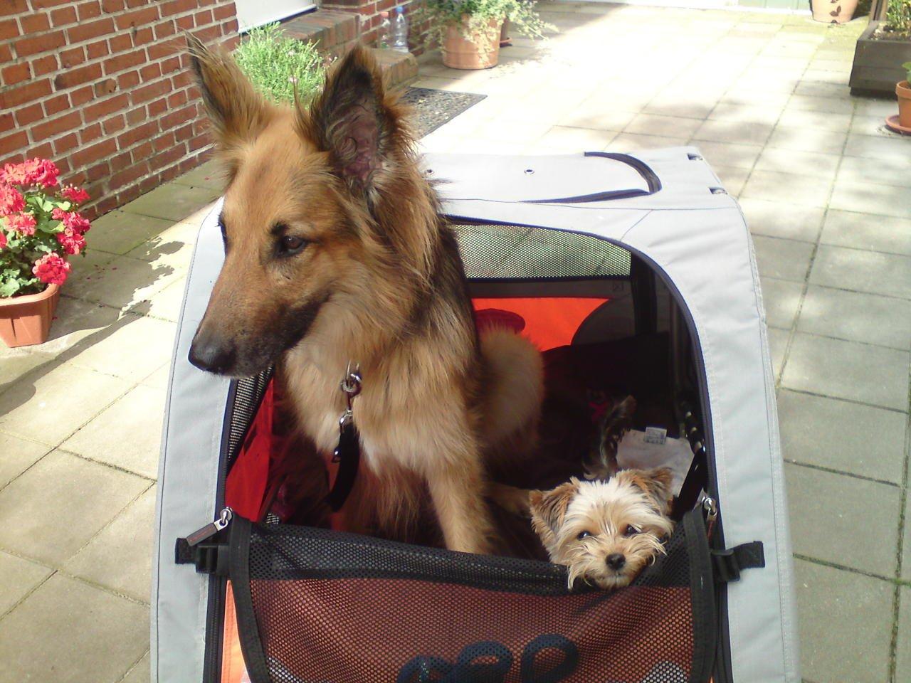 Szeneriebild Hunde Fahrradanhänger