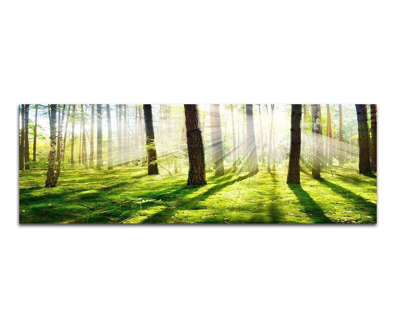 Panoramabild Panoramabild Panoramabild XXL auf Leinwand und Keilrahmen 180x70cm Wald Bäume Frühling Sonnenstrahlen df41b4