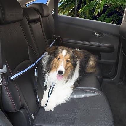 71fS2CVg0jL._SX425_ amazon com mdstop safety back seat polyester belt vehicle harness
