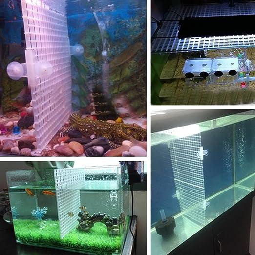 Dabixx Juego de separador de acuario para acuario, con ventosa, plástico, Blanco, 1 Set(30x30 cm): Amazon.es: Hogar