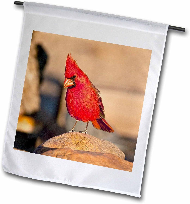 3dRose fl_84024_1 NA02 DNO0649 Cardinal Bird, South Eastern Arizona David Northcott Garden Flag, 12 by 18-Inch