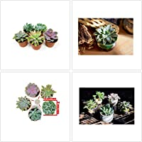 Organic Seeds: 5 Re Live Potted Succulents Fully Rooted in er Pots Soil by Farmerly