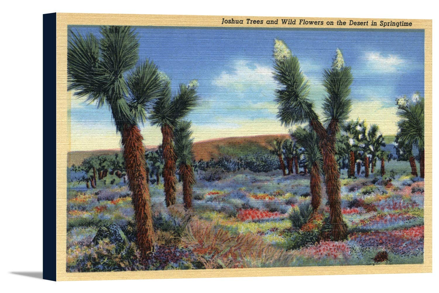 Joshua Trees and Desert Wild花ビュー 36 x 22 5/8 Gallery Canvas LANT-3P-SC-10219-24x36 36 x 22 5/8 Gallery Canvas  B0184ARE8S
