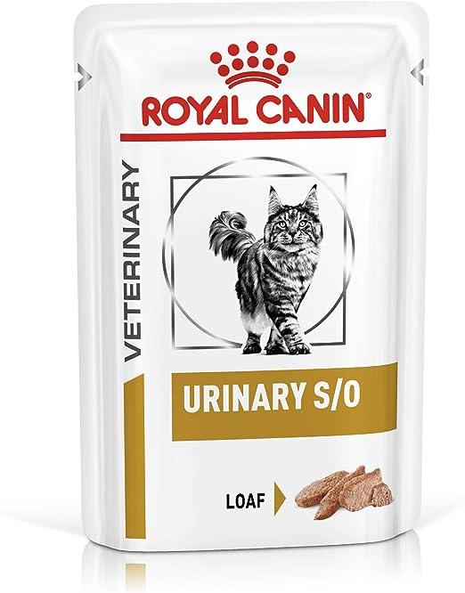 ROYAL CANIN Urinary S/O Chick Comida para Gatos - 4800 gr: Amazon ...