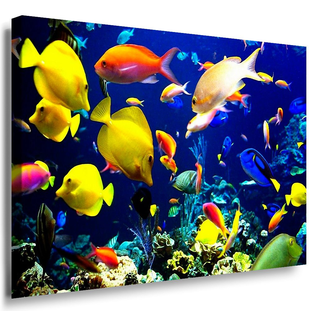 Julia-art Leinwandbilder - Fische, Ozean Meer Bild 1 teilig - 120 mal 80 cm Leinwand auf Rahmen - sofort aufhängbar   Wandbild XXL - Kunstdrucke QN.17-6