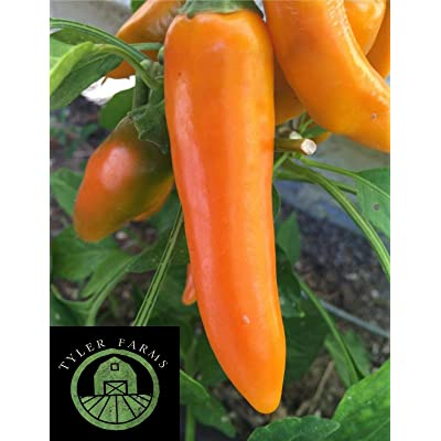 AchmadAnam - Seeds 20+ Bulgarian Carrot Pepper (hot Chili, Chile) Great for Salsa : Garden & Outdoor