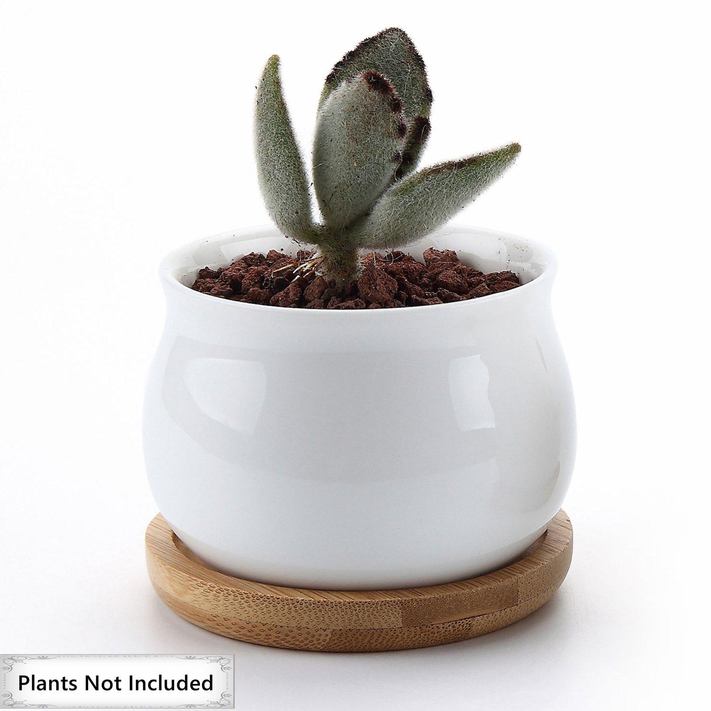 Amazon.com: T4U 2.75 Inch Ceramic White Jar Shape Design succulent ...