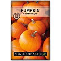 Sow Right Seeds - Small Sugar Pumpkin Seed for Planting - Non-GMO Heirloom Packet with Instructions to Plant a Home Vegetable Garden - Great Gardening Gift (1)
