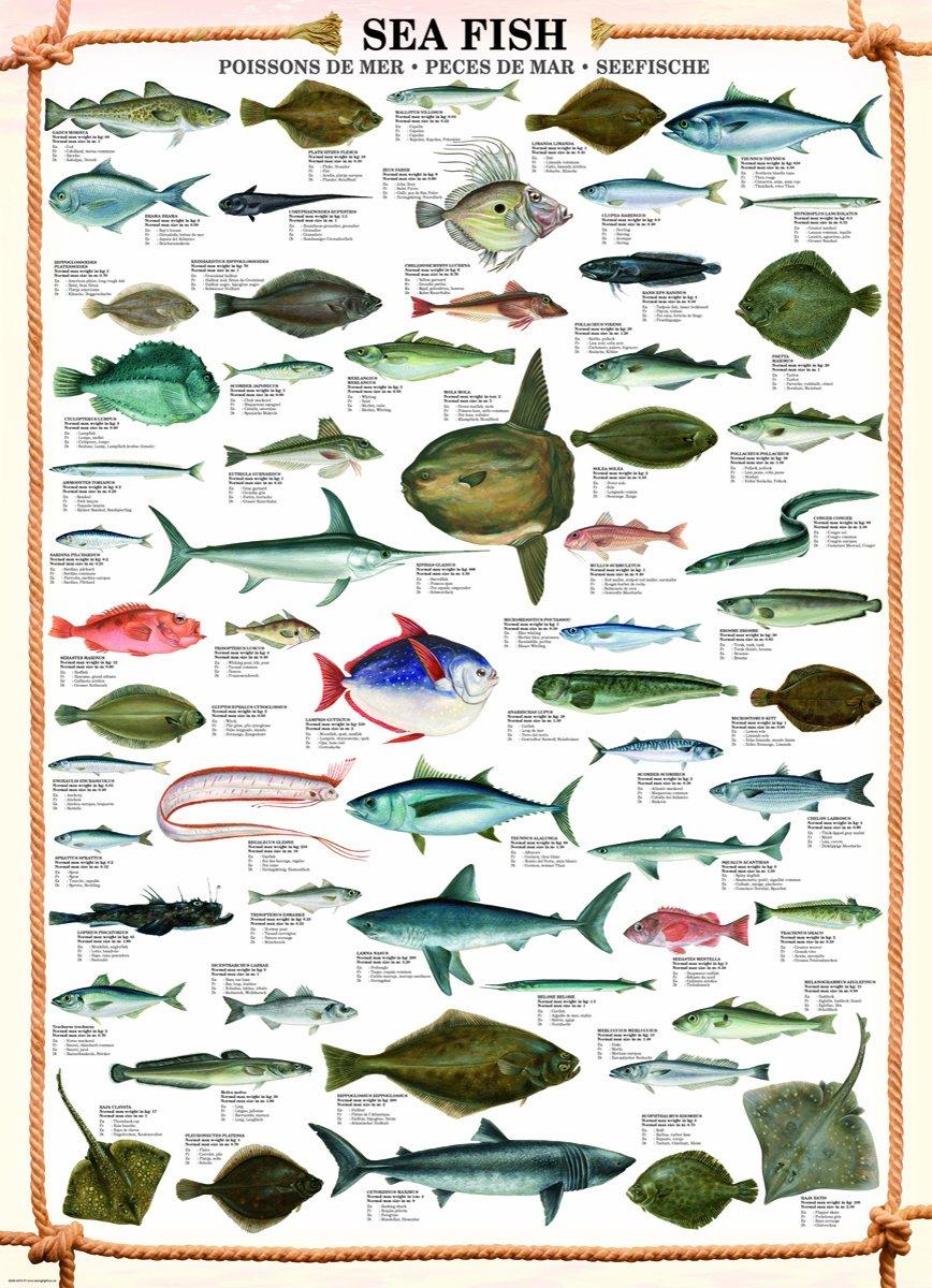Freshwater fish jigsaw puzzles - Freshwater Fish Jigsaw Puzzles