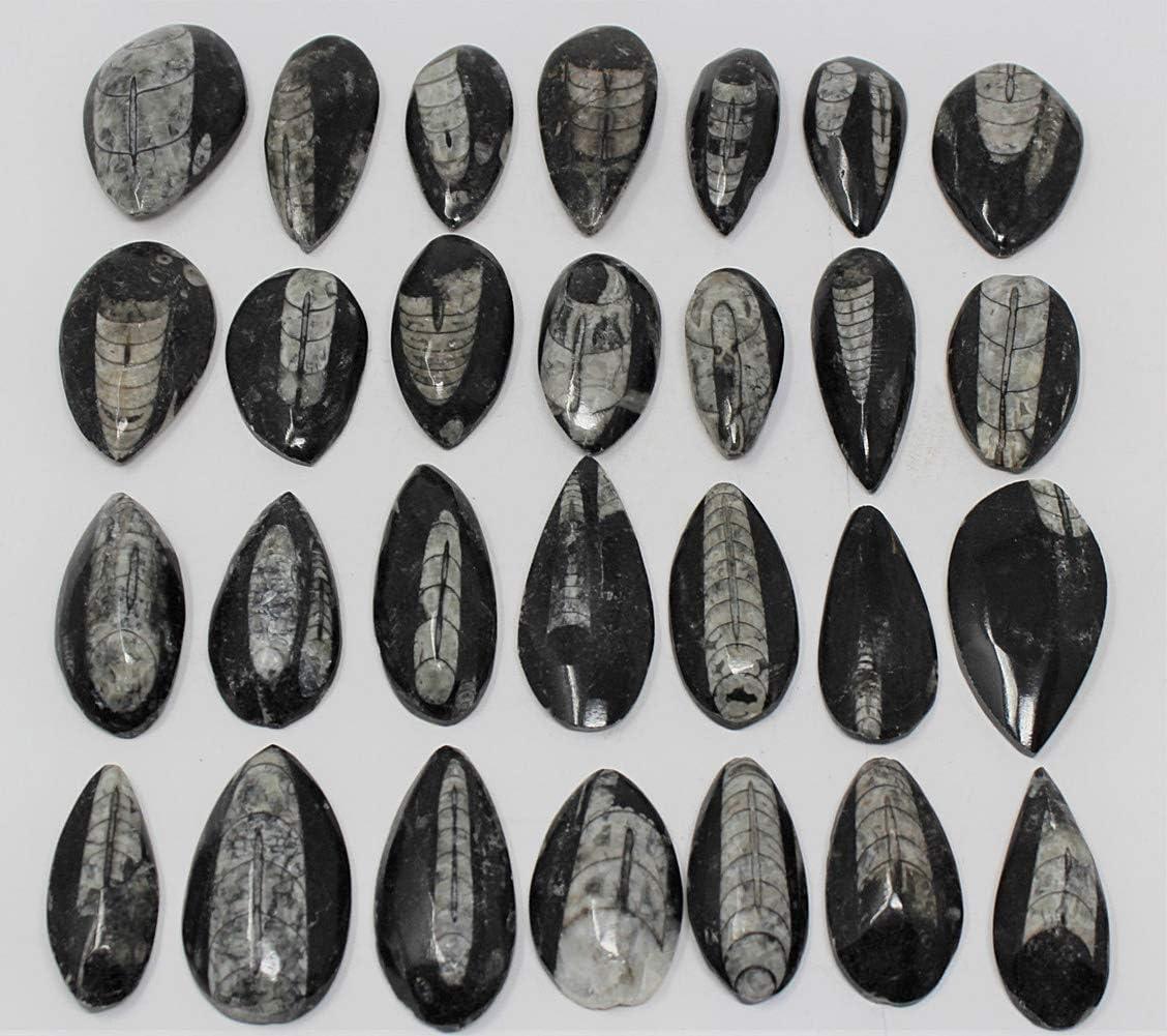 "10 Pack Orthoceras Fossil 400 Million Years Old Polished Pocket Stone 1.5/"" 2/"""