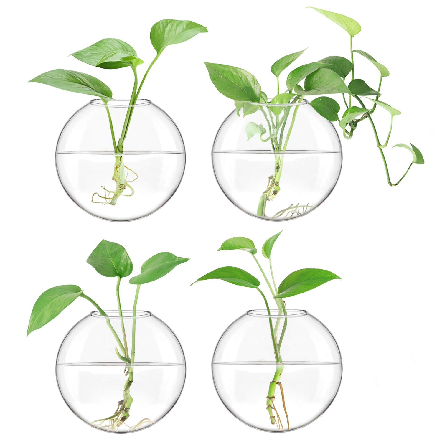 Mkono 4 Pack Glass Wall Hanging Planter Wall Mounted Plant Vase Indoor Air Plants Terrariums for Home Office Living Room Decor, Oblate