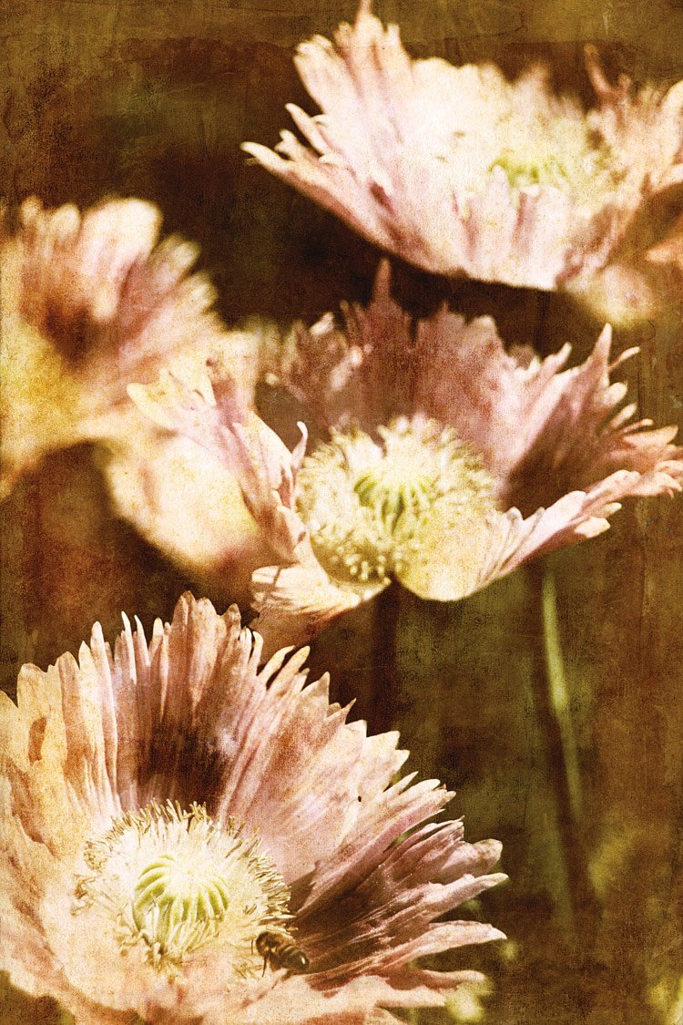Poppies 4 , 36x24in. (paper)