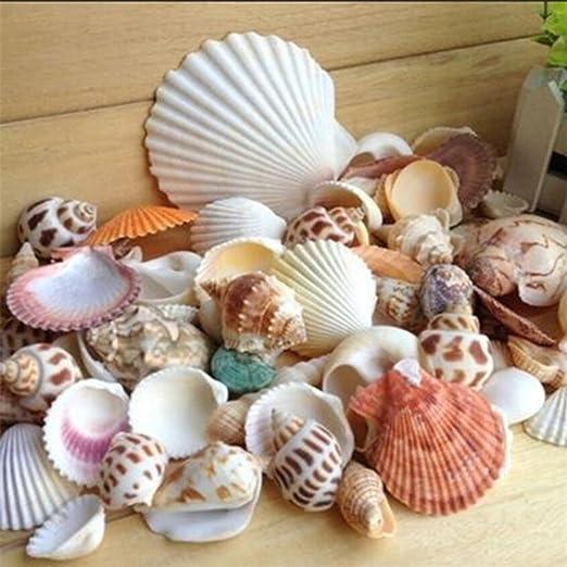 Amazon De Gemini Mall Strandmuscheln Verschiedene Arten Naturliche Muscheln Als Dekoration Fur