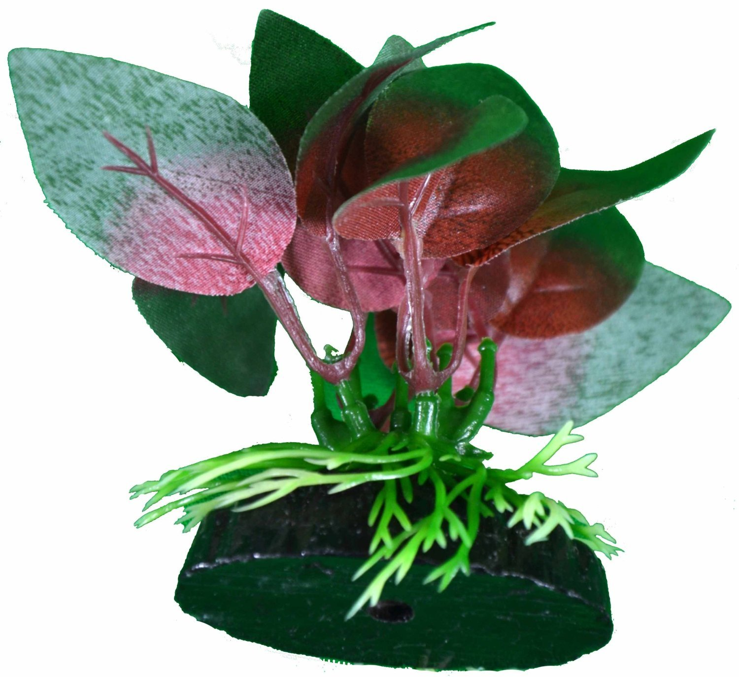 Betta Plant Red Anubias Leaf By bluee Spotted Great For Betta Fish