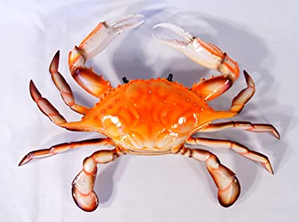 Amazon.com: Hand Painted Large Replica Chesapeake Bay Red Crab Wall ...