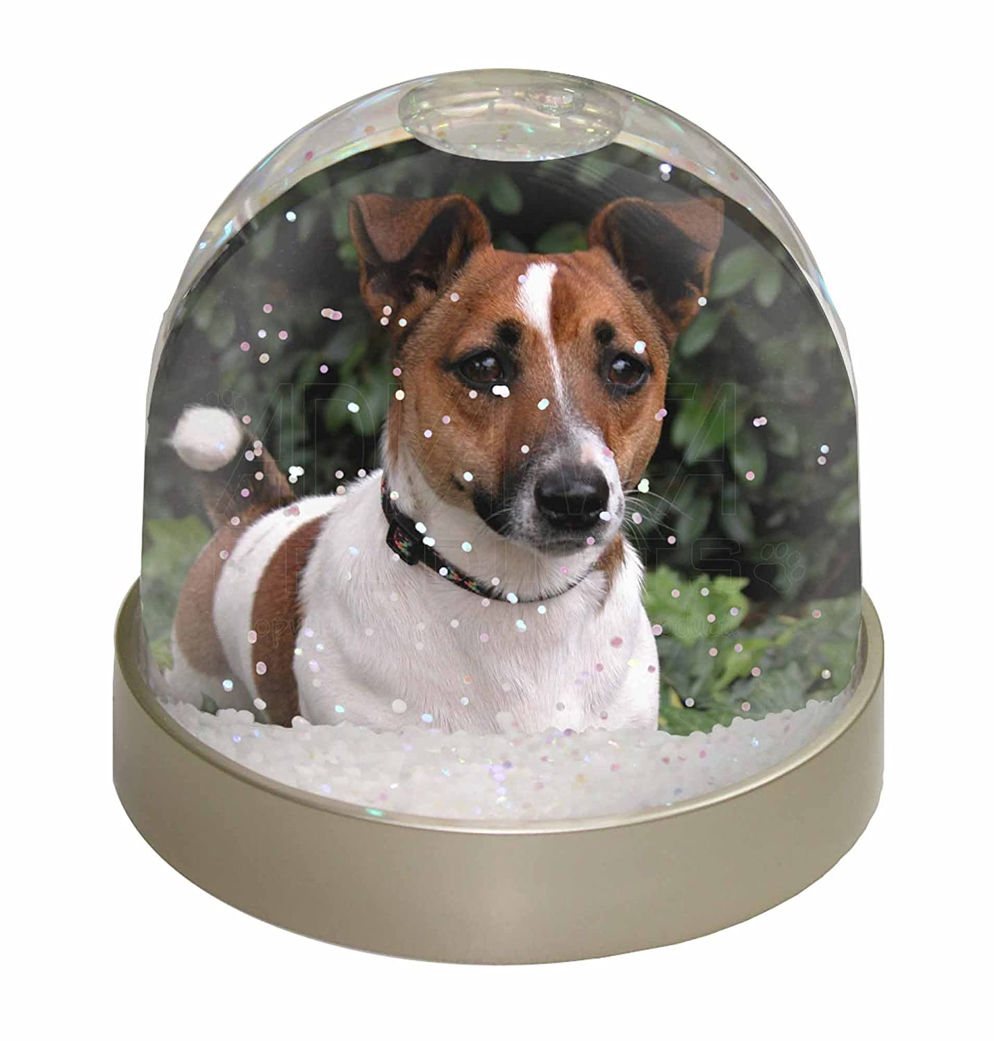 Advanta Jack Russell Terrier Dog Snow Dome Globe Waterball Gift, Multi-Colour, 9.2 x 9.2 x 8 cm Advanta Products AD-JR55GL