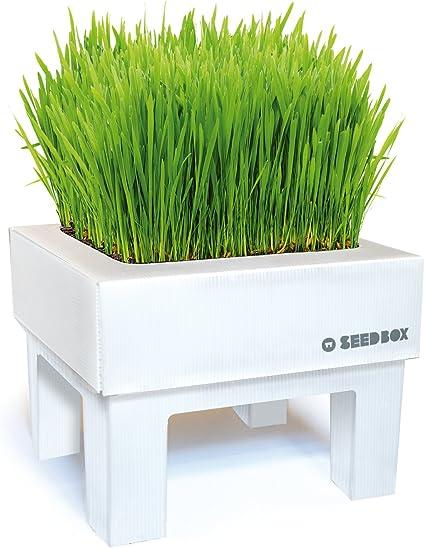 SeedBox SBMIHG Kit huerto Urbano de Hierba, Blanco, 20x25x25 cm ...