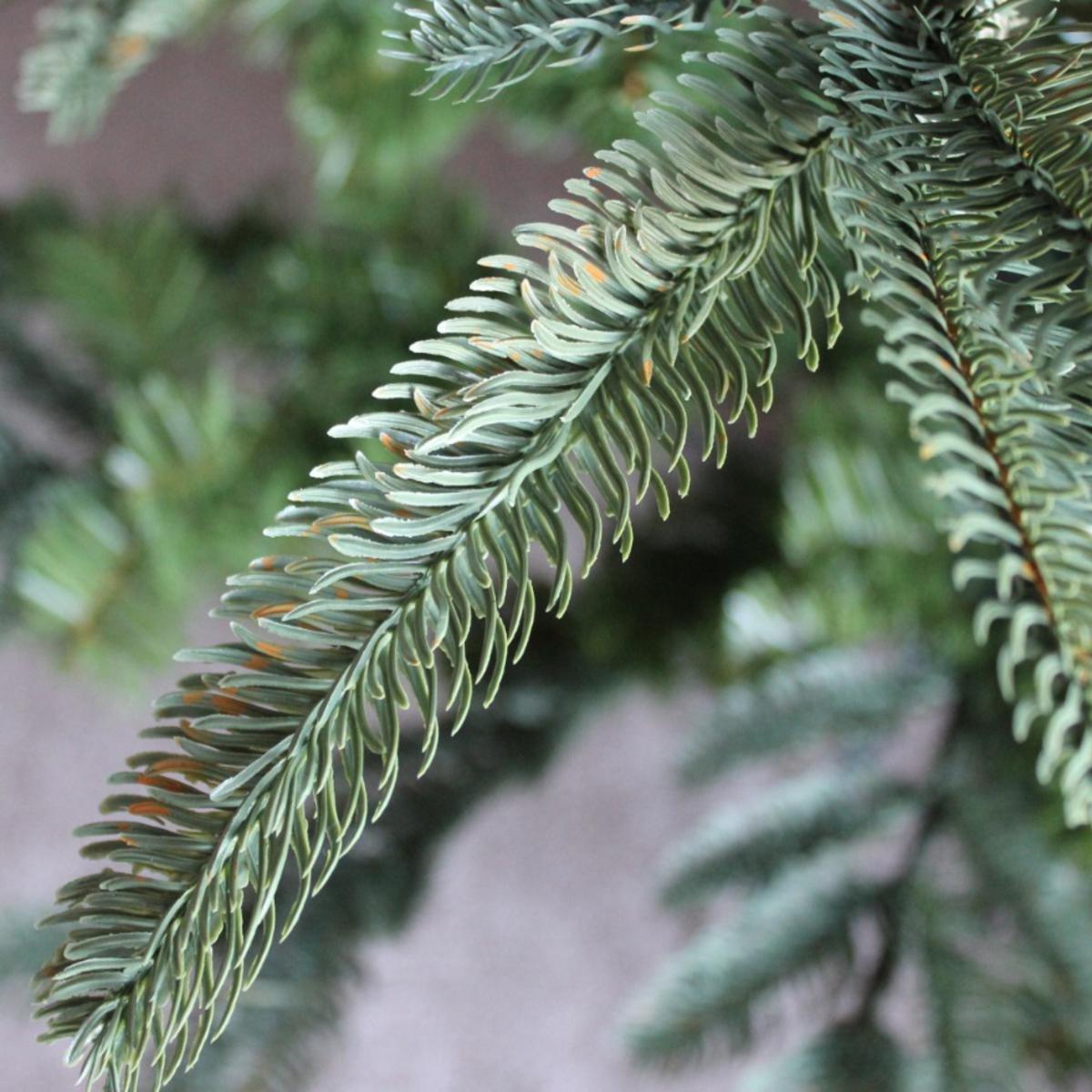 1.8m Everlands Nobilis Fir Artificial Luxury Realistic Christmas ...