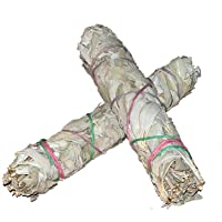 Large 7 Inch 18-20cm Californian White Sage smudge