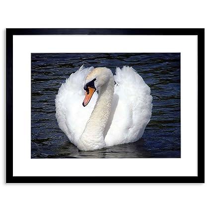 Amazon.com: PHOTO NATURE BIRD SWAN WHITE BEAUTIFUL WATER FRAMED ...