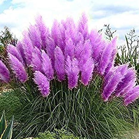 6 piante in vasi di 9cm ERBA ornamentale 6 Varietà Mista Collezione