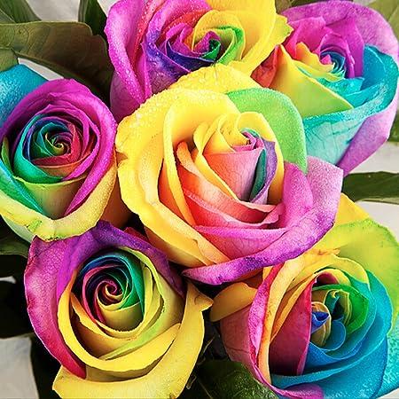 50×Semillas Rosas Arcoiris flores Planta jardín raro Multicolor Azul púrpura