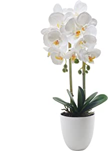 ENCOFT Alicemall Phalaenopsis Artificial Flower 12 Heads White Simulation Butterfly Orchid Bonsai with Ceramic Vase Wedding Party Home Centerpiece Decor (White)