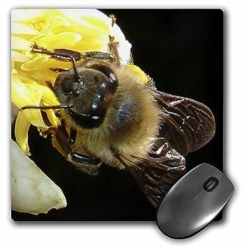 3dRose LLC 8 x 8 x 0.25 Inches Mouse Pad, miel de abeja sobre flores