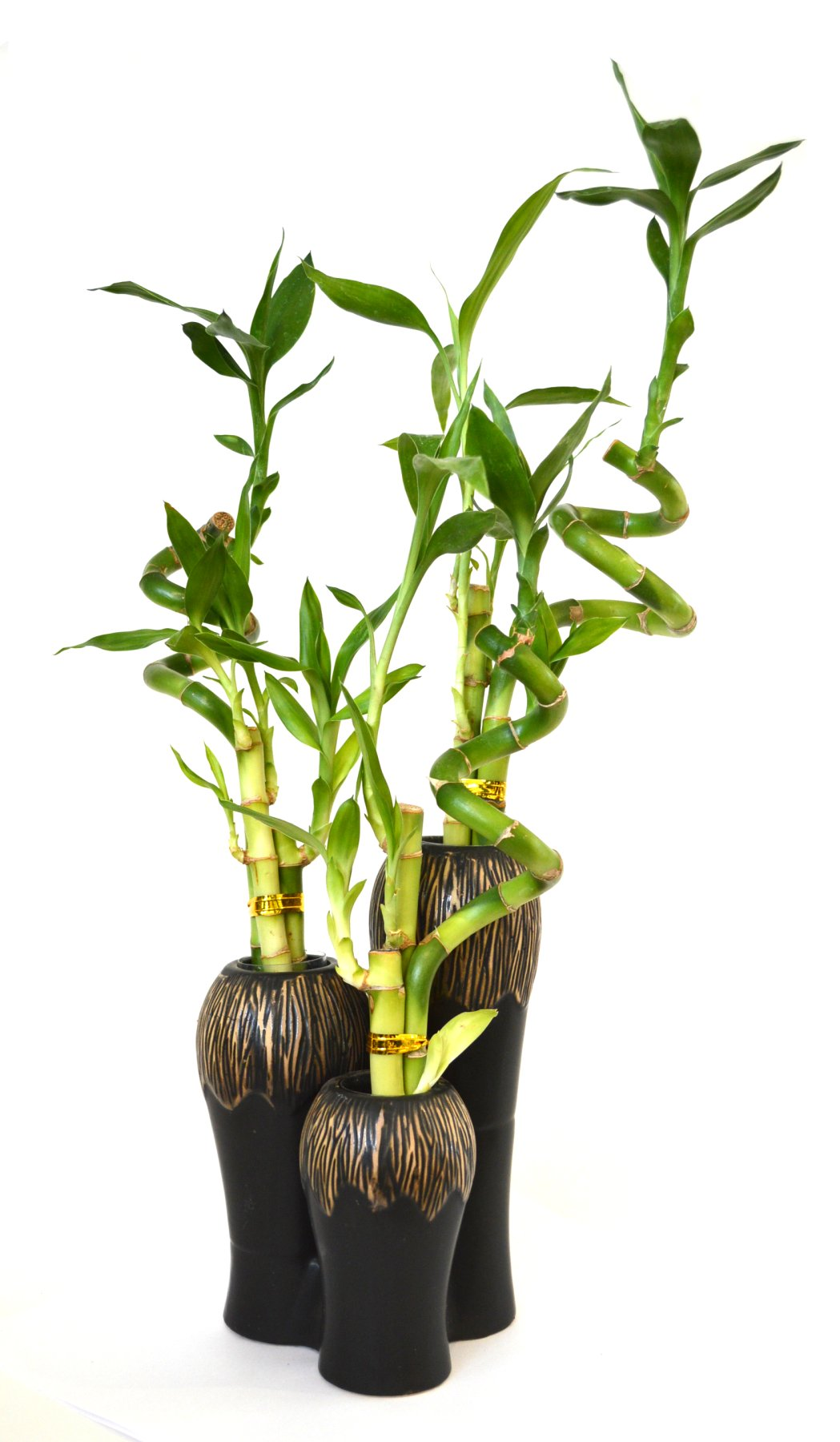 9GreenBox - Lucky Bamboo - Spiral Style 3 Set with Ceramic Vases