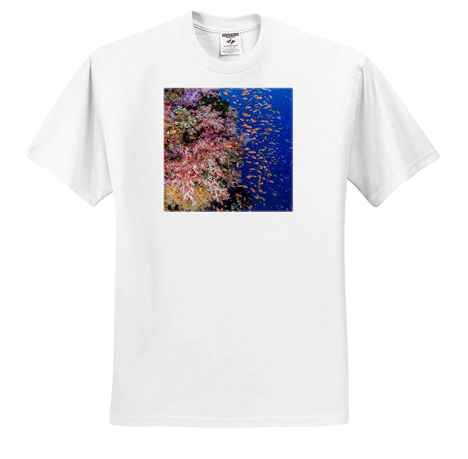- Adult T-Shirt XL ts/_314016 Underwater Reef with Coral and Anthias 3dRose Danita Delimont Fiji