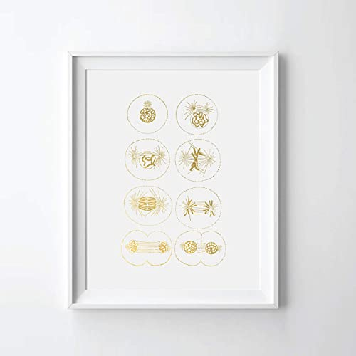 Cell Division Mitosis Gold Foil Art Print Biology Lover Gift 08″ x 10″ UNFRAMED