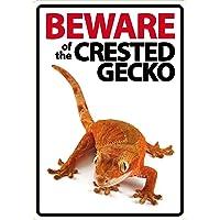 Magnet & Steel Cuidado de la Crested Gecko