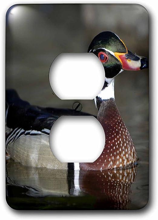 3dRose lsp/_91330/_6 Wood Duck Male portrait-US24 BFR0122-Bernard Friel 2 Plug Outlet Cover Multicolor