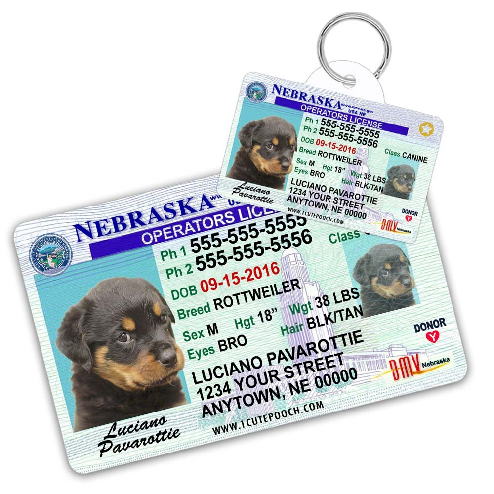 Nebraska Driver License Custom Dog Tag for Pets and Wallet Card - Personalized Pet ID Tags - Dog Tags For Dogs - Dog ID Tag - Personalized Dog ID Tags - Cat ID Tags - Pet ID Tags For Cats by 1 Cute Pooch